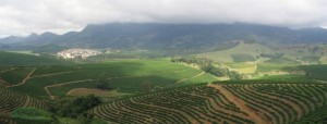 Kávové plantáže v Brazílii.