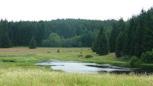 Investice do lesů jsou ideální volbou pro trpělivé investory.