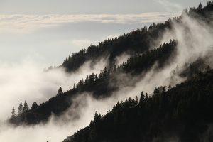 V současné době jsou lesy nebo zemědělská půda velmi výhodnou investicí.