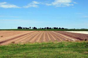 Zemědělská půda už není v očích investorů tak atraktivní jako dřív.
